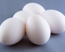卵(たまご・タマゴ)