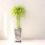 観葉植物!初心者のおすすめは?室内で育てやすいのは?